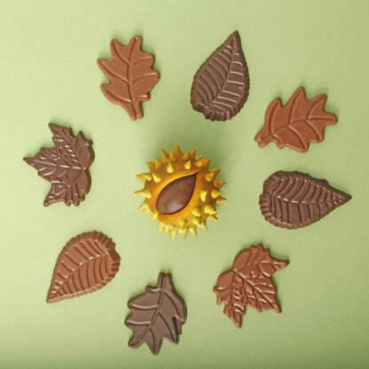 Coffret de feuilles d'automne